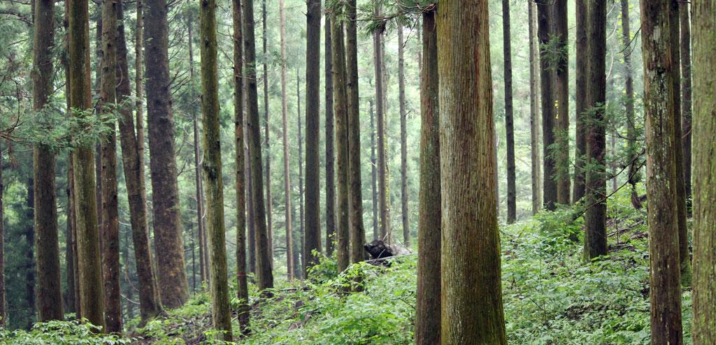 中之条の森