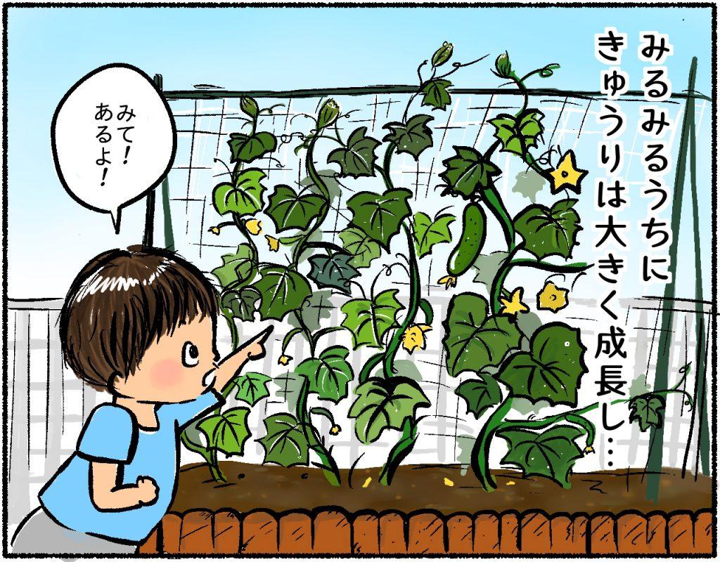 家庭菜園2コマ目